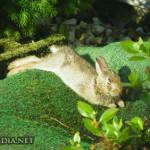 bunny319