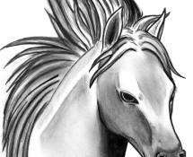 Horse319
