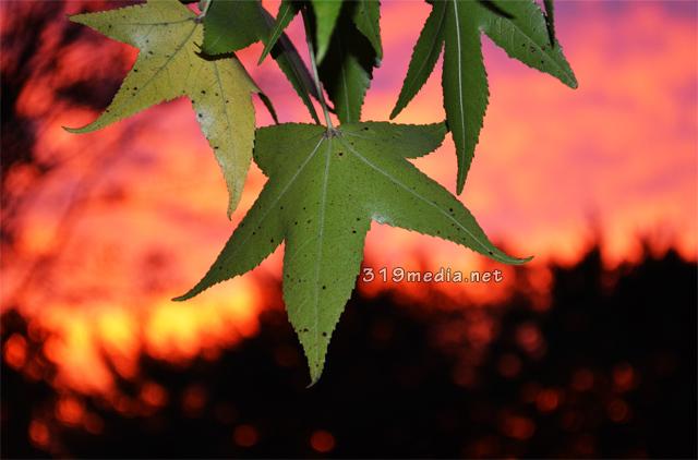 leafysunset