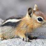 Cute Chipmunk Photo